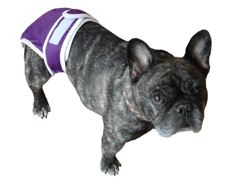 Пес в собачьем подгузнике