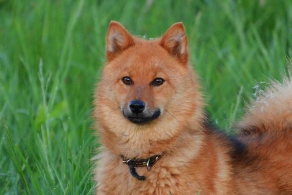 Пес на страже