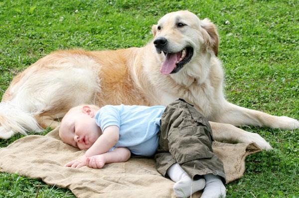 Пес охраняет сон малыша