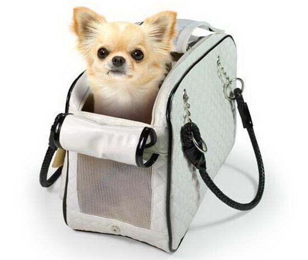 Чихуахуа в компактной сумке