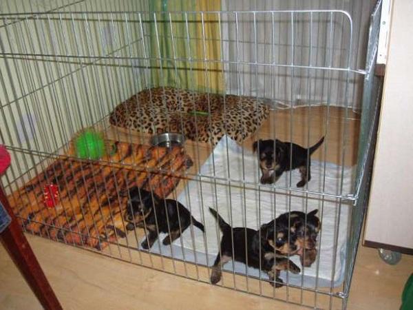 Щенки в собачьем манеже