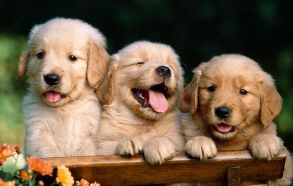 Собачьи клички для кобеля
