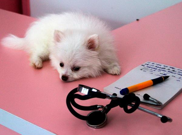 Щенок на приеме у ветеринара
