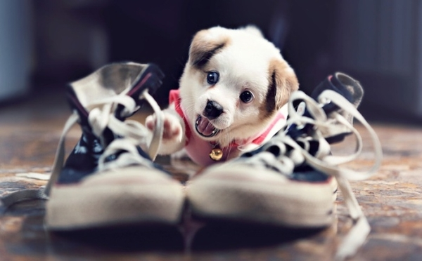 Щенок рядом с обувью