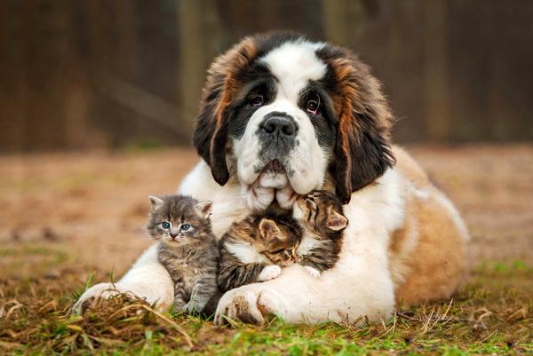 Щенок с котятами