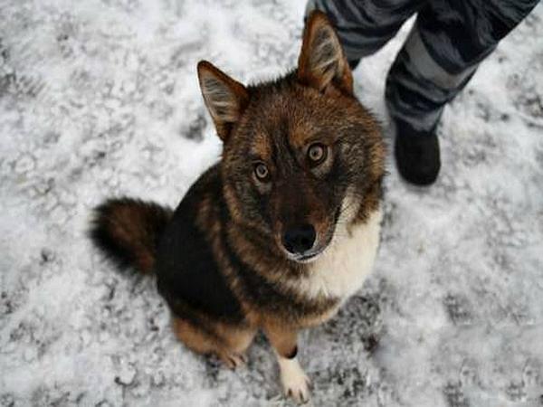 Собака Сулимова в зимнем аэропорту