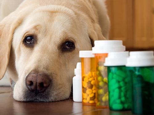 Успокоительные средства для собак