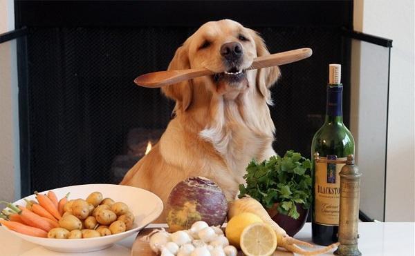 Собака рядом с натуральной пищей