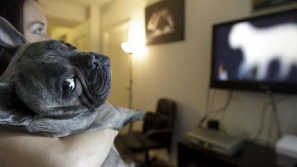 Собака у телевизора