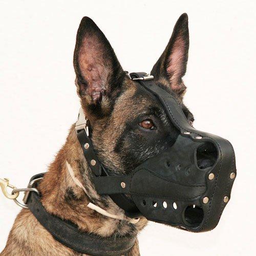 Крупная собака в наморднике