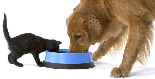 Чем кормить собаку чтобы она набрала вес