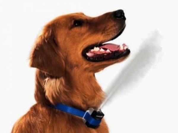 Действие спрея Антилая при лае собаки