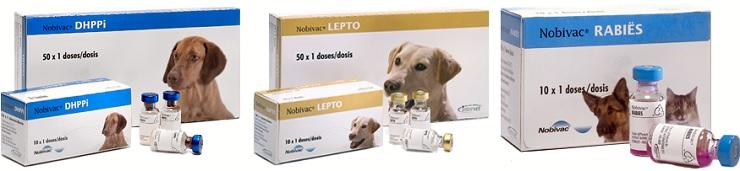 Виды вакцин для собак