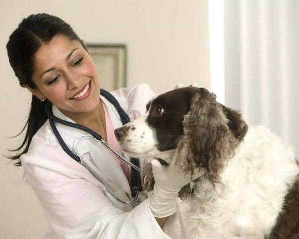 Визит к ветеринарному врачу