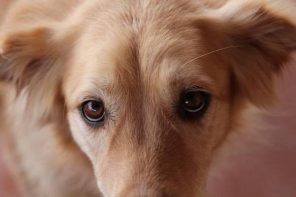Грустный взгляд собаки