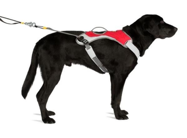 Черный пес в шлейке