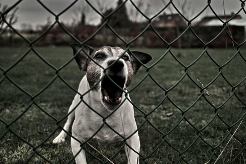 Агрессивно настроенная собака
