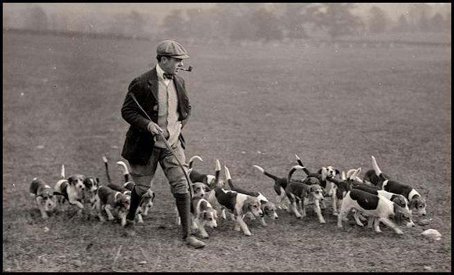 Историческое фото 19 века охотника со стаей биглей