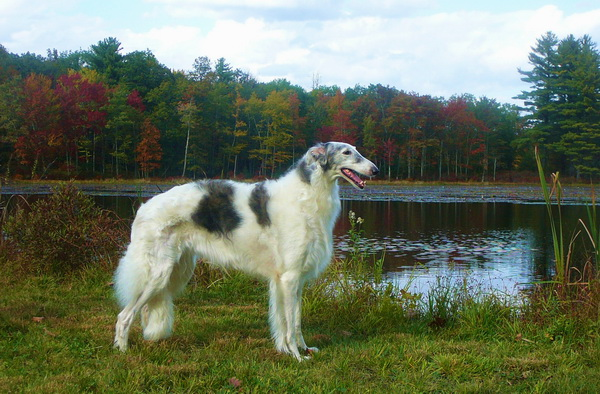 Собака на фоне реки