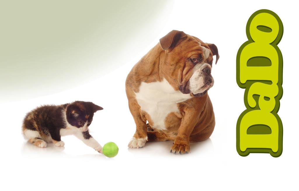 Собака и кот на фоне логотипа Дадо