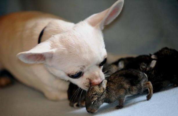 Собака и ее потомство