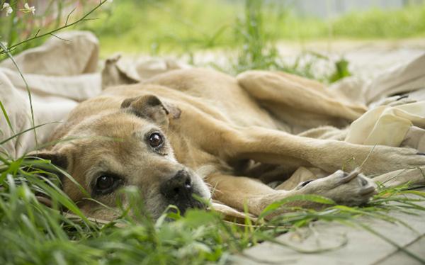 Белая собака в траве