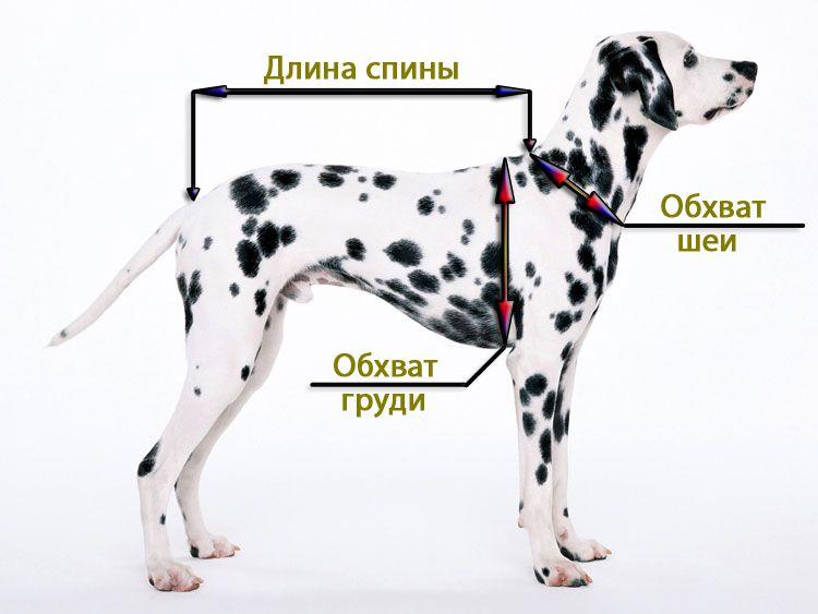 Размеры как измерять собаку