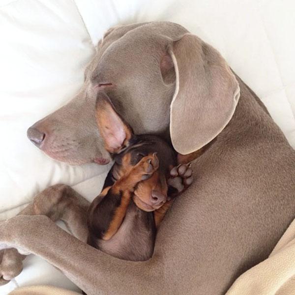 Крупная и мелкая собака