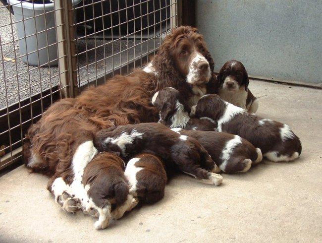 Собака с детенышами в вольере