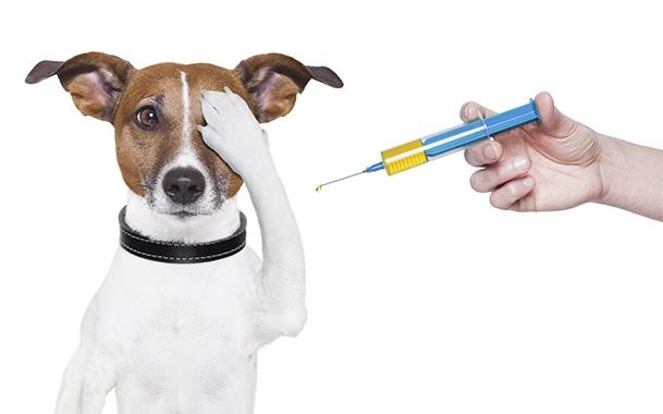 Собачке собираются делать укол