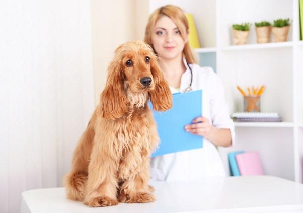Собака на столе ветеринара