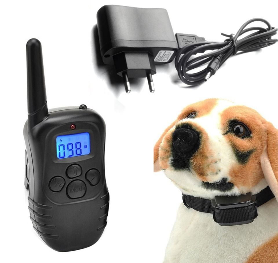 Собака в электроошейнике