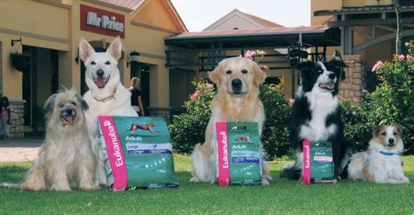 Пять собак с кормом Eukanuba