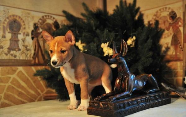 Щенок возле египетской статуэтки