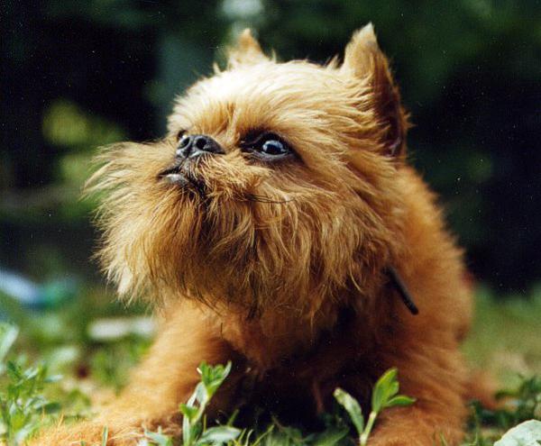 Грустный щенок смотрит вдаль