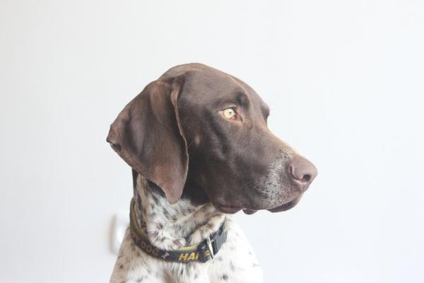 Голова собаки крупным планом
