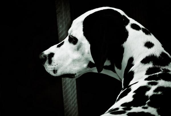 Красивая голова собаки