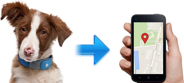 Собака и телефон