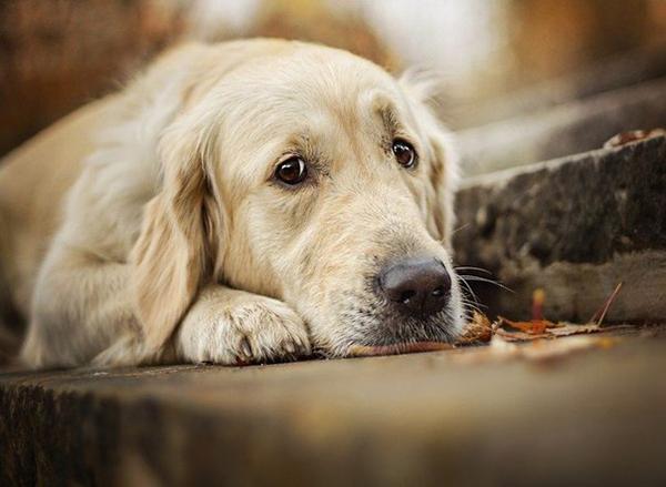 Грустная собака на ступеньках