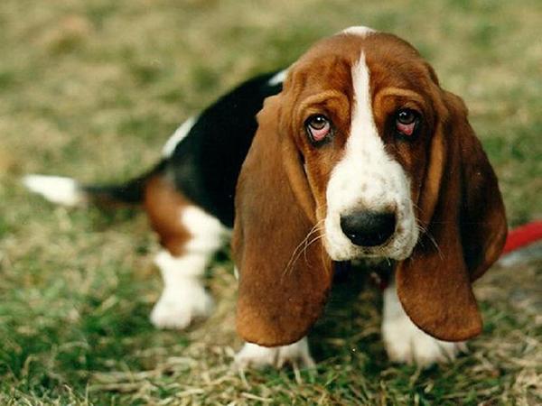 Грустная собака в траве