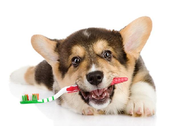 У собаки воняет из пасти