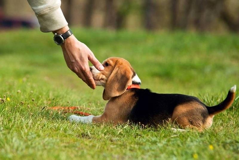 Хозяин кормит пса из руки