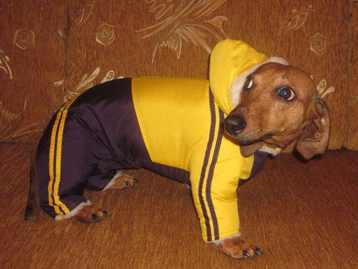 Собака в желтом комбинезоне