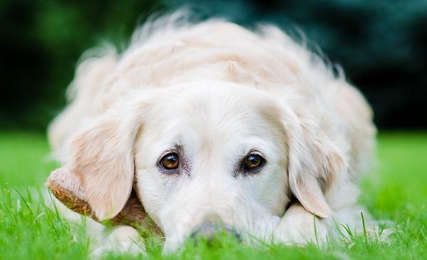 Морда собаки крупным планом