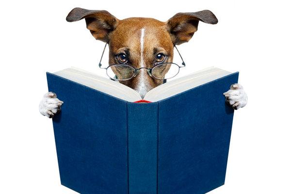 Собака в очках с книгой