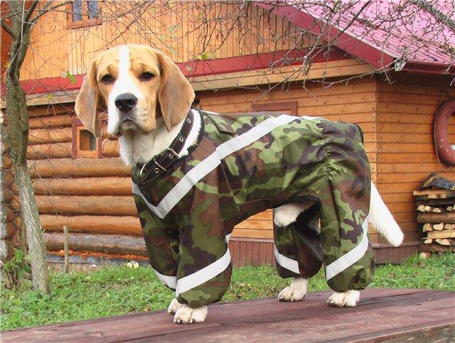 Собака в зеленом комбинезоне