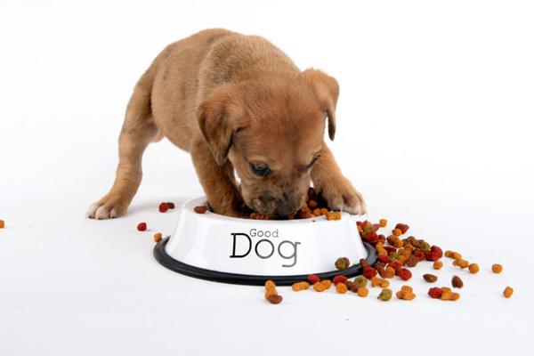 Маленький щенок ест из свой миски
