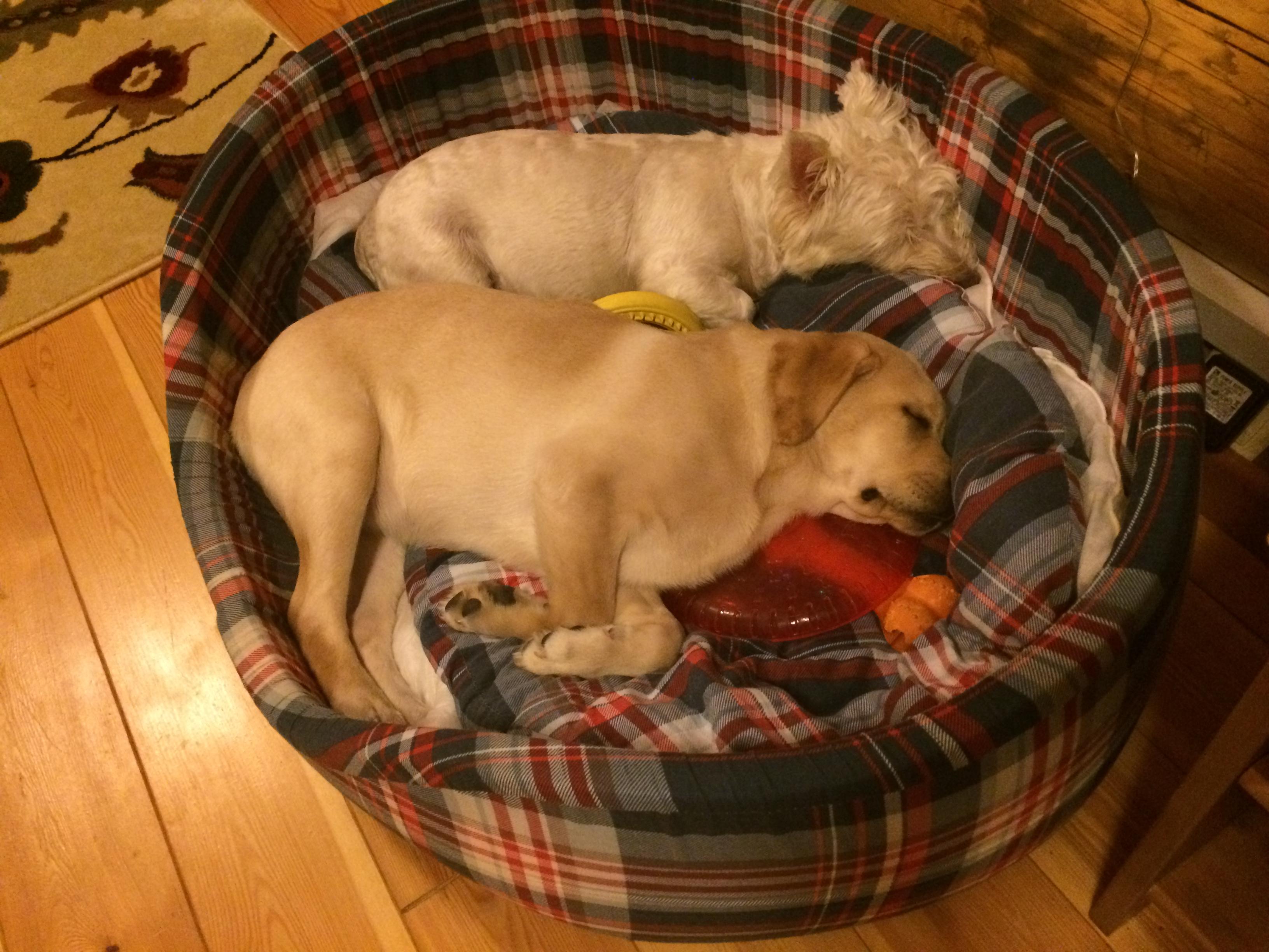 Две собаки спят на своей лежанке