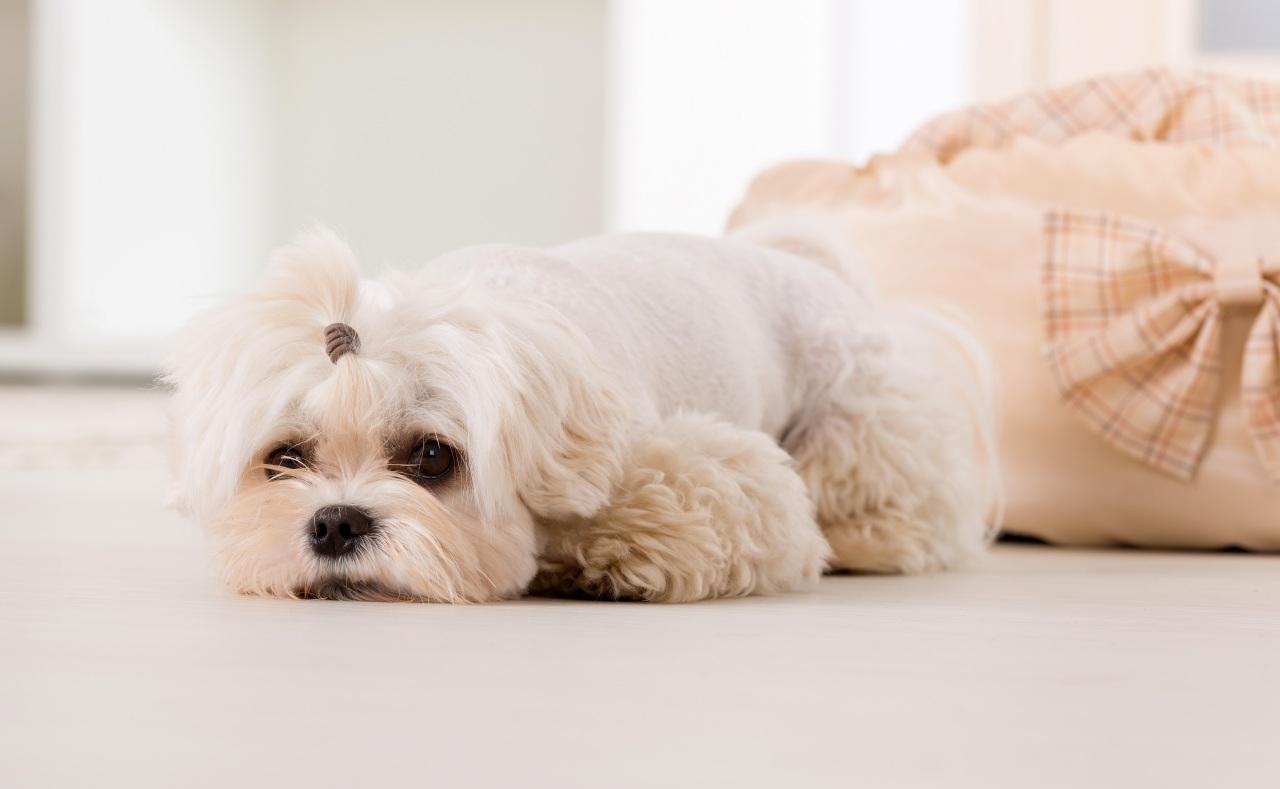 Грустная собака лежит на полу