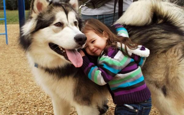 Девочка обнимает аляскинского маламута